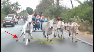 Rekla Race Gudalore – 2018 at Theni District -2018-03-14 (Thattanjittu)