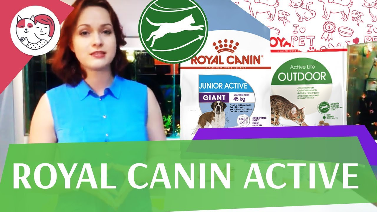 RoyalCanin active на ilikepet