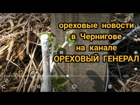 Ореховые новости в Чернигове на канале ОРЕХОВЫЙ ГЕНЕРАЛ!