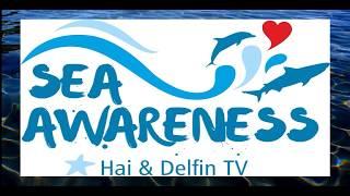 Hai & Delfin TV bei SeaAwareness