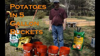 Potatoes in 5 gallon buckets From Seed to Table Series