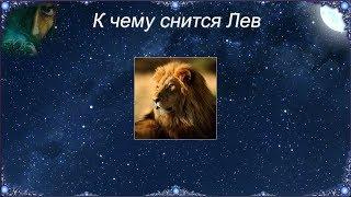 К чему снится Лев видео -К чему снится Лев (Сонник)