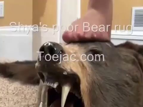 feet on Bear _ jacojoe harvey