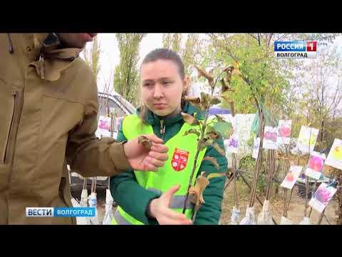 Управлением Россельхознадзора проведен мониторинг посадочного материала на стихийных рынках в Волгоградской области
