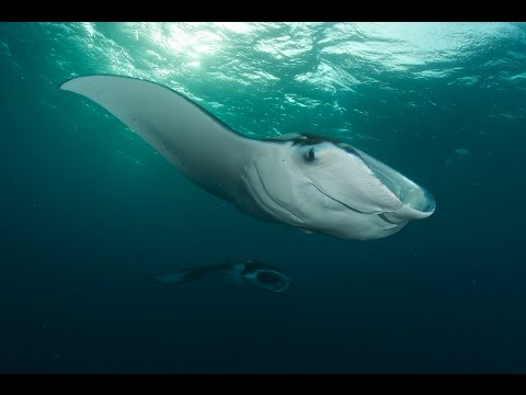 Palau 2015 - Sharks, Manta Rays, Jelly-Fish Lake..., Palau allgemein,Palau