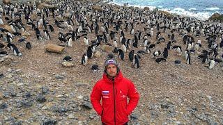 Что Будет Если Попытаться Схватить Пингвина. Купаемся в Антарктиде. Попали в Шторм. Пролив Дрейка