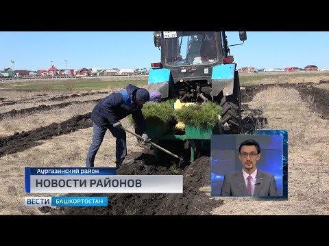 Посадка леса в селе Толбазы Аургазинского района попала в видеосюжет республиканского телевидения