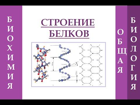 Строение белка. Уровни организации белковой молекулы.