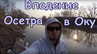 Рыбалка на осетре в московской области