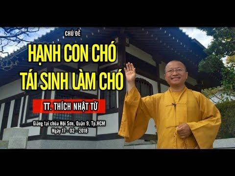 Hạnh Con Chó Tái Sinh Làm Chó - TT. Thích Nhật Từ