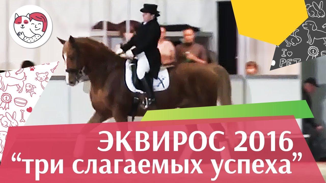 Семинар и практический мастер класс Три слагаемых успеха в конном троеборье ЭКВИРОС 2016 на ilikepet
