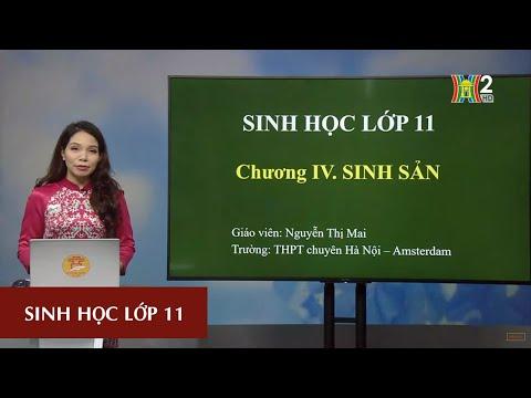 MÔN SINH HỌC - LỚP 11 | CHỦ ĐỀ: SINH SẢN Ở THỰC VẬT | 15H45 NGÀY 25.04.2020 | HANOITV