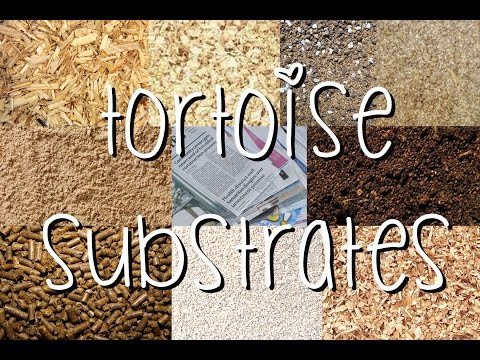 Download Tortoise Substrates Mp4 HD Video and MP3