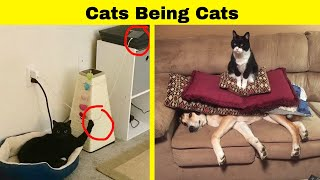 Cats Being Cats