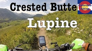 Review and trail experience of the Lupine Trail