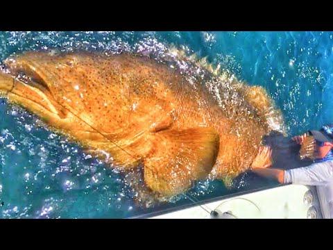 Best Kid Friendly Fishing Videos!!! ++ Biggest Fish A Kid Has Ever Caught??? Shark += 101