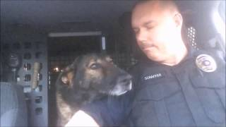 K-9 Faust retires from BNSF Railway Police after 8 years, 1 day of service