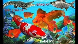 Cá Vàng Fish-Bé Học Nhanh Tên Các Loài Cá ❤️❤️❤️