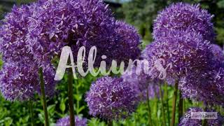 Plant these in your Fall garden for Spring action!