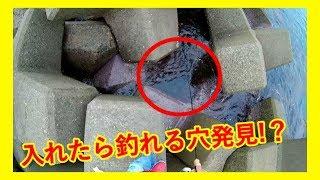 福井の有名釣りスポットで入れたら釣れる穴を発見!?