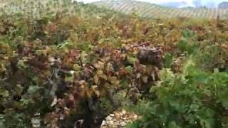 YouTube: Ridge Dry Creek Valley Lytton Springs Zinfandel