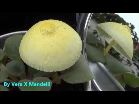O esquema de medicina no momento de tratamento de um fungo de pregos