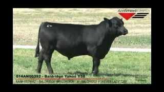 Accelerated Genetics Baldridge Yahoo Y58