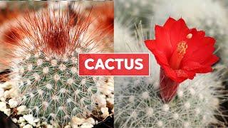 Cactus 101 -  Care Tips & Unique Traits