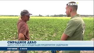 Птичий могильник под Киевом. Директору птицефабрики избирают меру пресечения