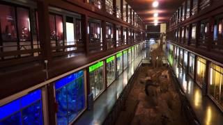 preview picture of video 'Anuncio del Museo de Ciencias Naturales El Carmen (Onda-Castellón)'