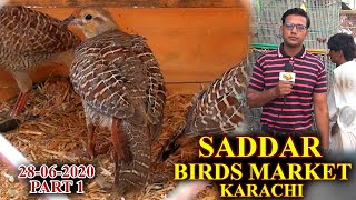 EXOTIC BIRDS MARKET SADDAR KARACHI 28-6-20 BEAUTIFUL BIRDS AND COLORFUL PARROTS UPDATES VIDEO PART 1