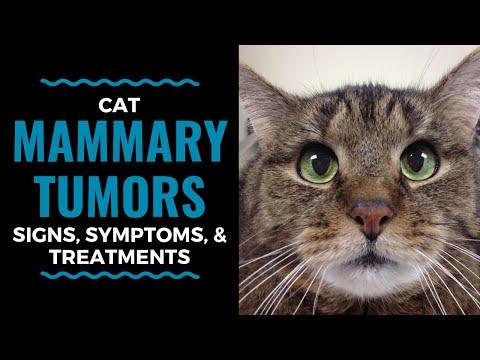 Cancer uterin simptome tratament
