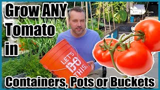 How To Grow Tomatoes In Containers, Pots Or Buckets. Container Gardening.