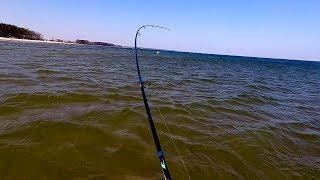 Ловля кумжи в финском заливе с берега