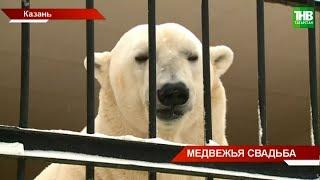 В Казанском зоопарке пополнение: новый житель - белый медведь по кличке Терпей | ТНВ