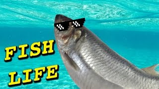 FISH LIFE // I FEEL YOU BRO!