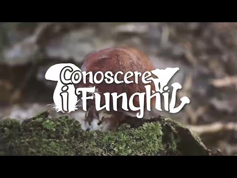 Il fungo di unghie su mani e gambe come liberarsi