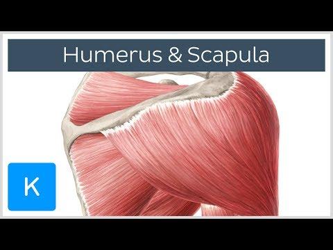 Rückenschmerzen Krämpfe im Darm