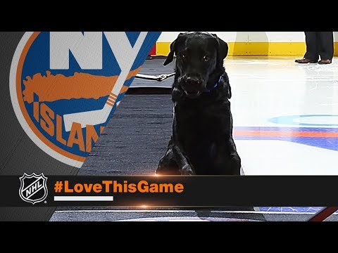 Charlie the dog drops ceremonial first puck