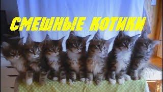 Смешные коты и кошки. Приколы с котиками.