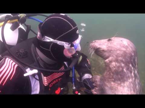 Удивительное общение дайвера с морским котиком