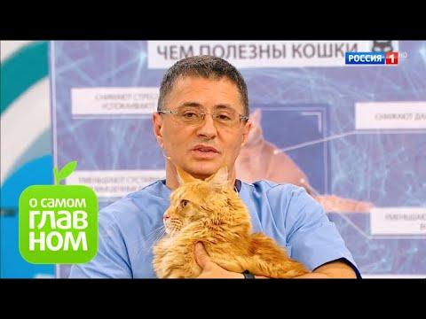 О самом главном: Кошки и здоровье, сухость кожи, опасное мясо