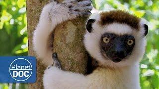 Madagascar. The Children of Lemuria (Full Documentary)