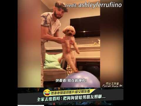 女友全家去度假把狗狗交給男友照顧的下場