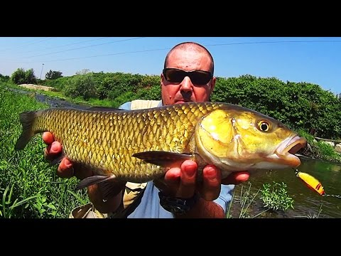 Comprare il galleggiante lucente per pesca