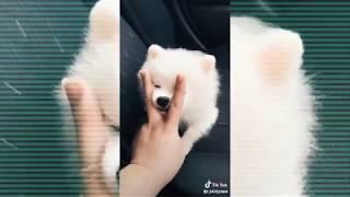 Adorable Pets - Tik Tok