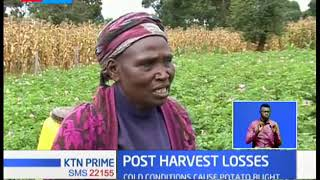 Nyandarua farmers count losses as cold weather cause potato blight