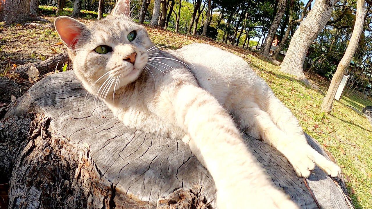 切り株の舞台の上で可愛いポーズを見せてくれるサバトラ猫