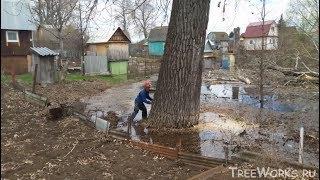Валка больших деревьев, подборка. Часть 2. Big tree felling compilation (Russia). Part 2.