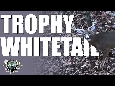 Headhunter Chronicles – Bowhunting trophy Whitetails